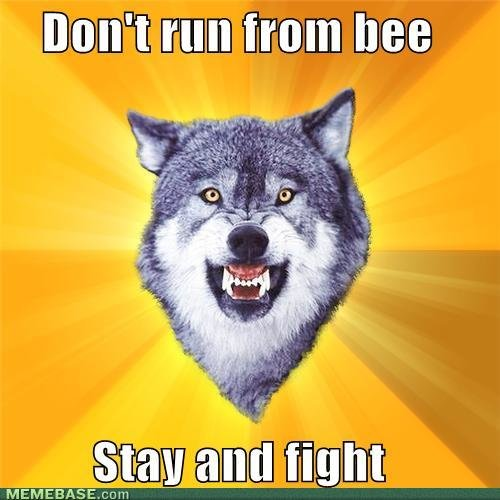 memes courage wolf dont run from bee stay fight