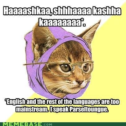 memes parselkitty hipster kitty