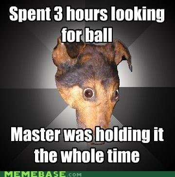 memes spent hours looking for ball