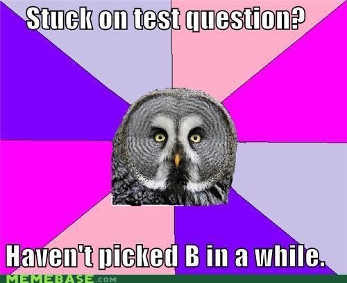memes wise owl test question