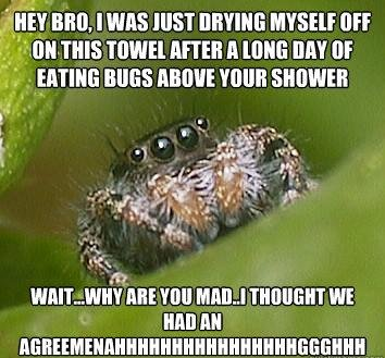misunderstood spider meme eating bugs