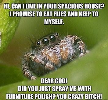 misunderstood spider meme furniture polish