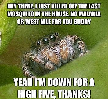 misunderstood spider meme high five