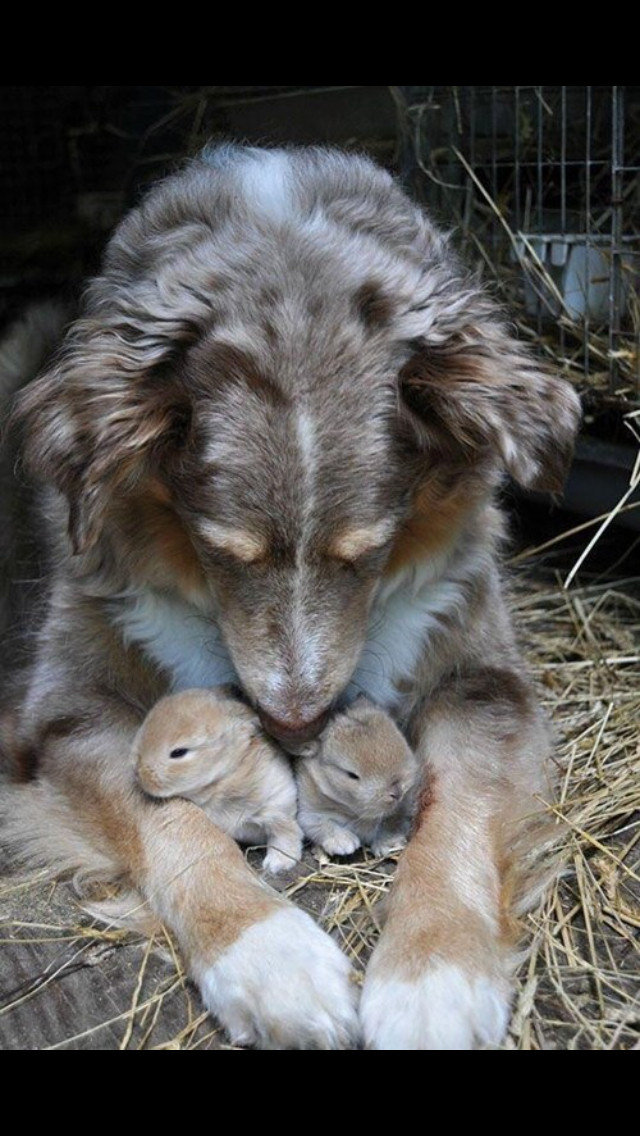 moms love for everyone