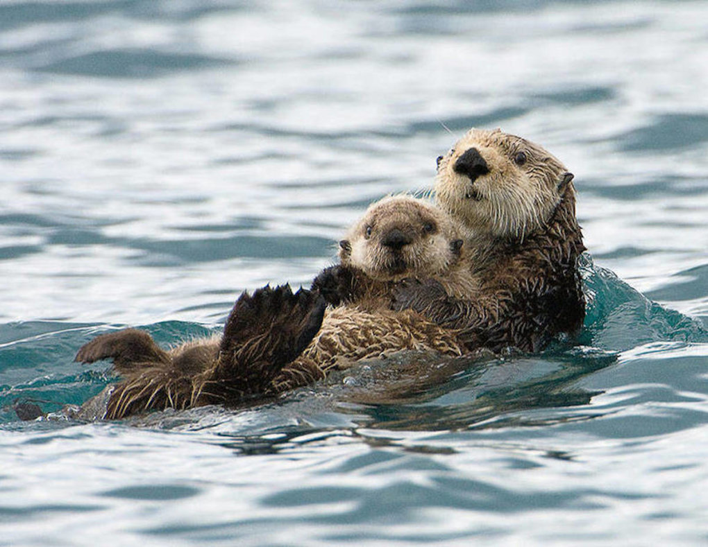 mother baby otter