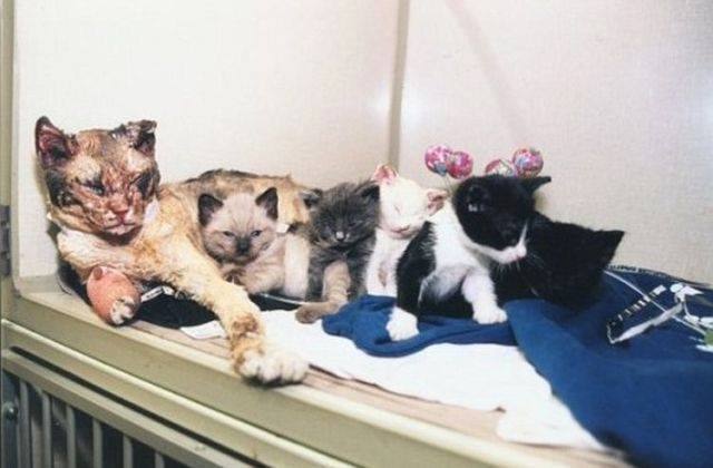 mother cat walks through flames times save kittens from building fire