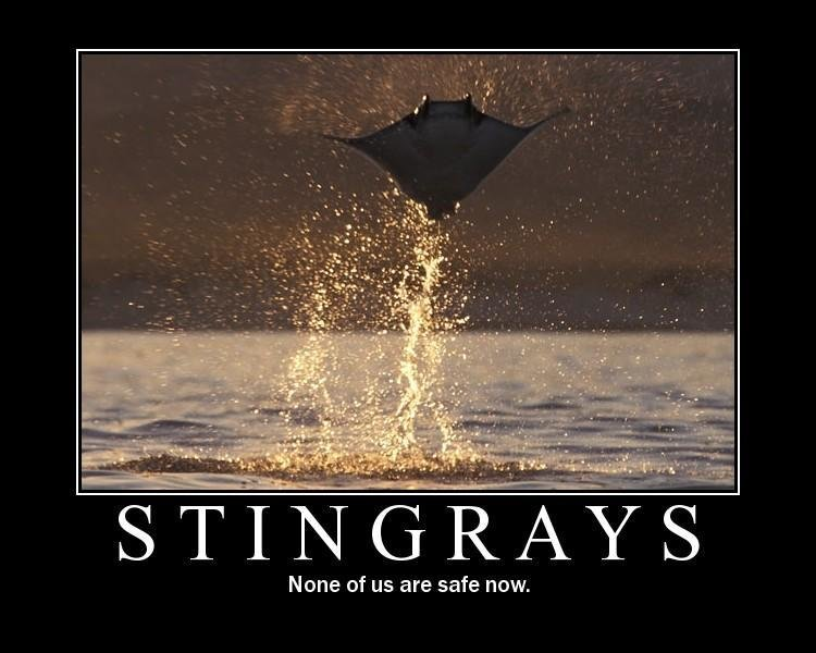 motivational posters stingrays flying out jpg