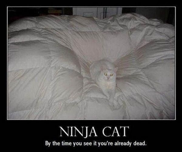 ninja cat808 - even more motivational pictures
