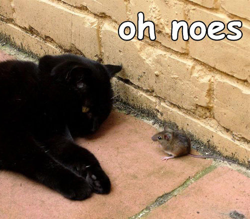 noes mouse