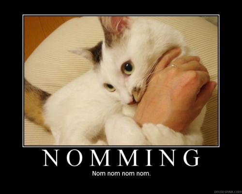 nomming - funneh cat pics