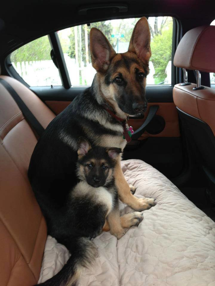 now thats safety seat