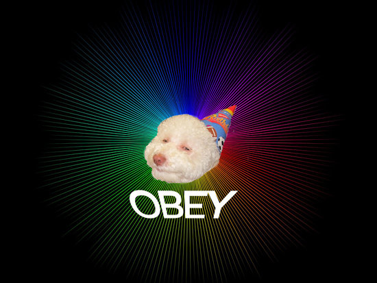 obey epic birthday dog meme picture