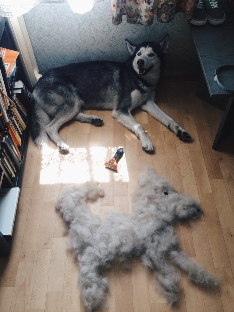 ohhh now two dogs