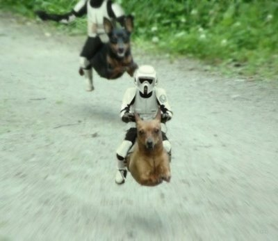 other uses for hover dogs