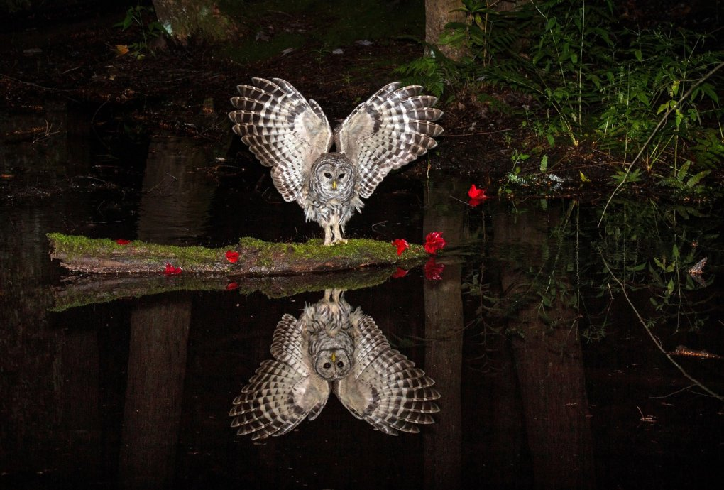 owl photography