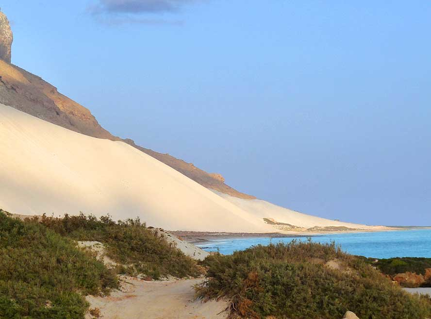 oy9kwsb - socotra island, yemen. one of the most alien looking places on earth.