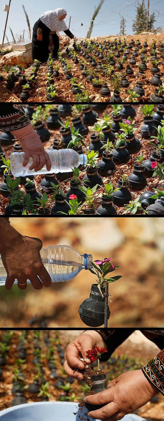 palestinian woman collects gas bombs fired israeli army she grows flowers