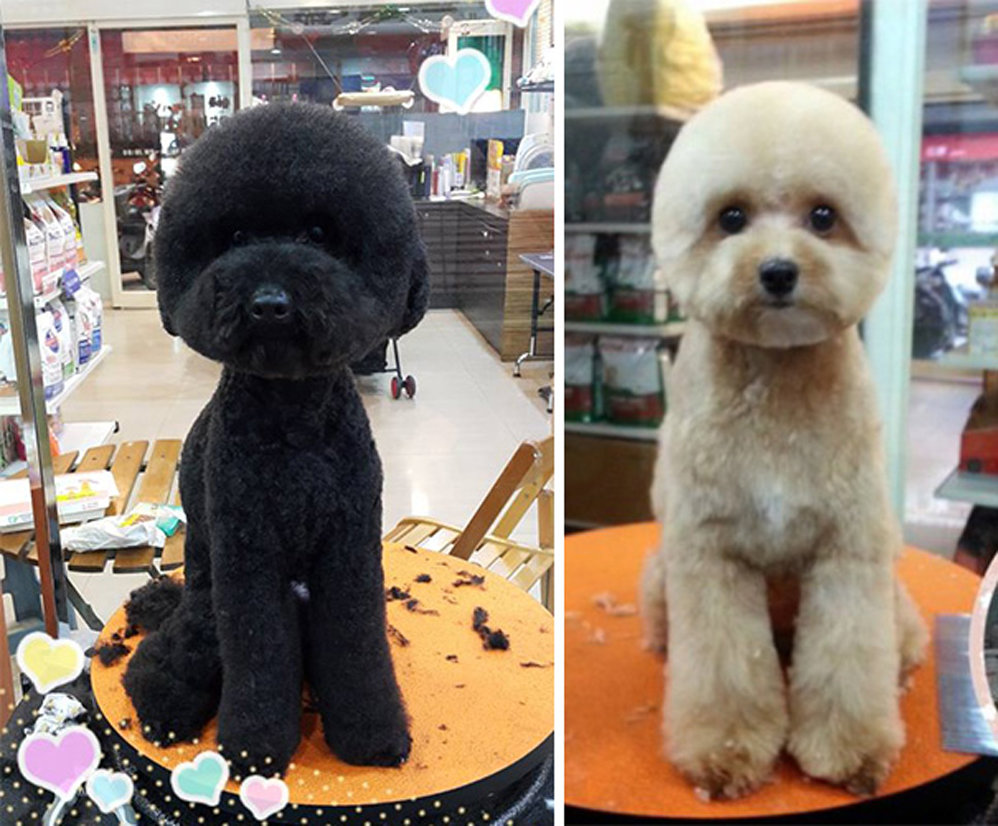 perfectly square round haircuts