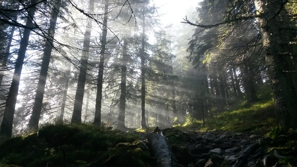 picture took deep forests norway weekend xpost from rpics