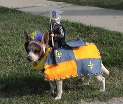 picture 8 - why dog's hate halloween...