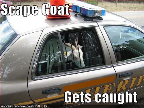 pictures scape goat gets