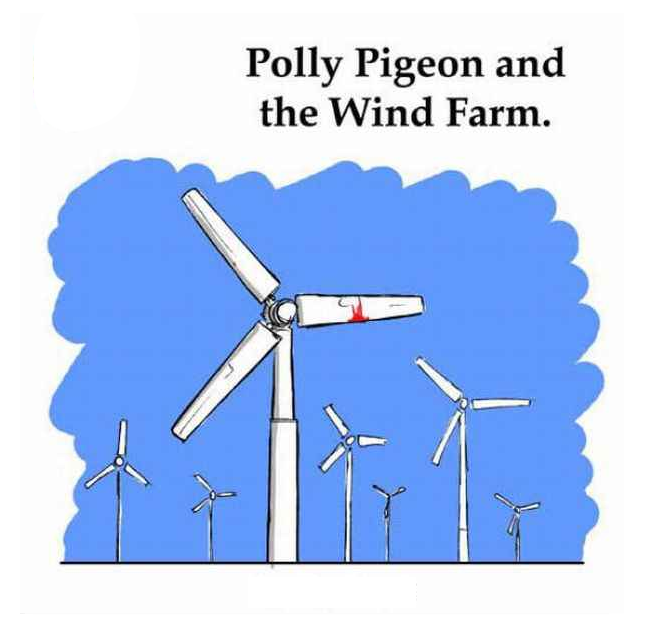 polly pigion