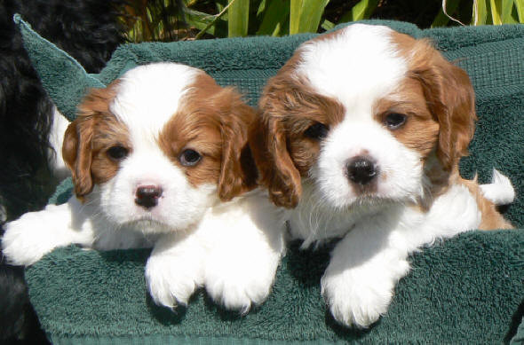 puppies1 - puppies that make your head explode