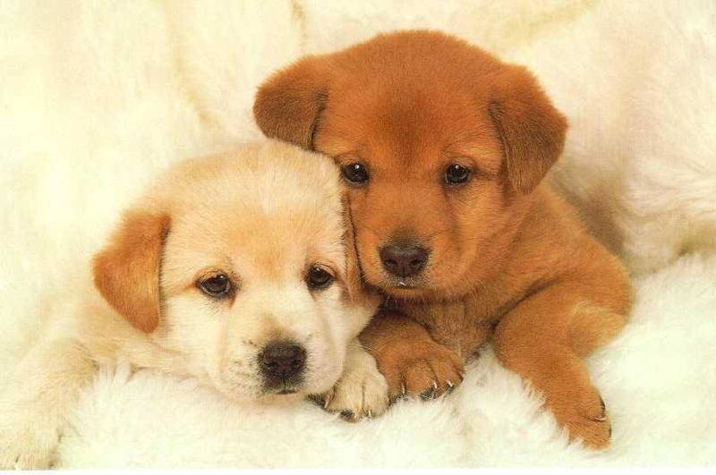 puppies 1 - puppies that make your head explode