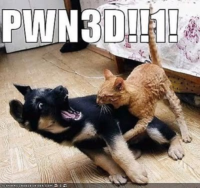 pwned chien chat