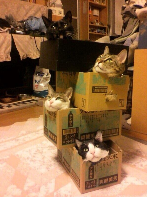 quotwhere should put these catsquot quotoh stack them anywherequot