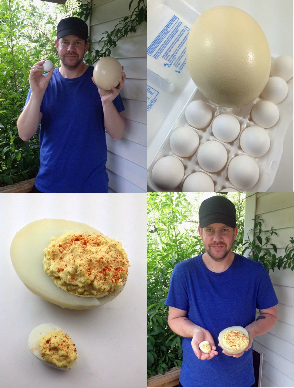scored couple ostrich eggs decided make deviled ostrich eggs