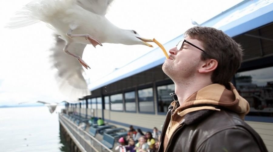 seagull french fry