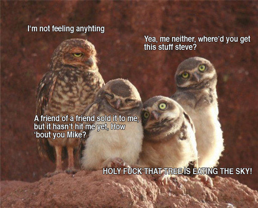 spaced owls