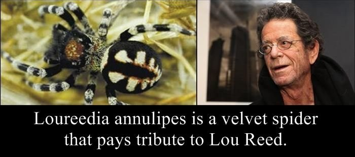 species named after famous persons strange