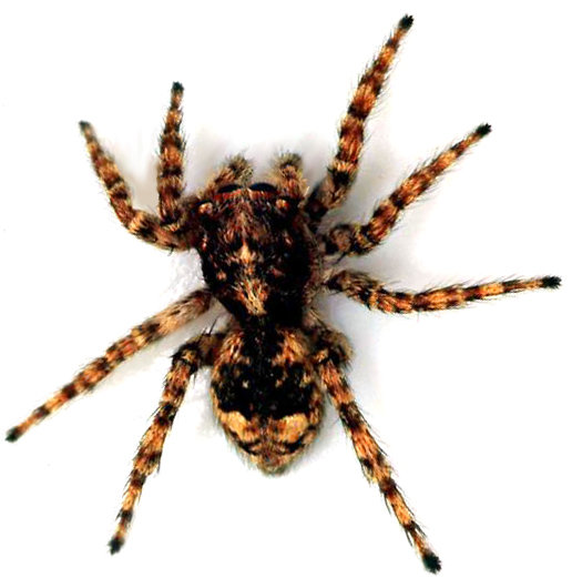 spiders - 20 most disgusting google image searches