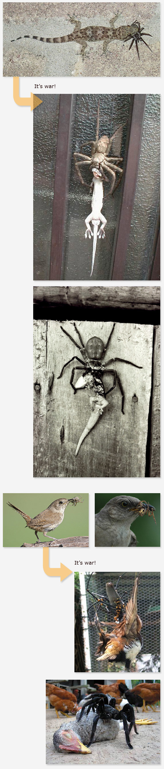 spiders - this is why you shouldn't mess with spiders