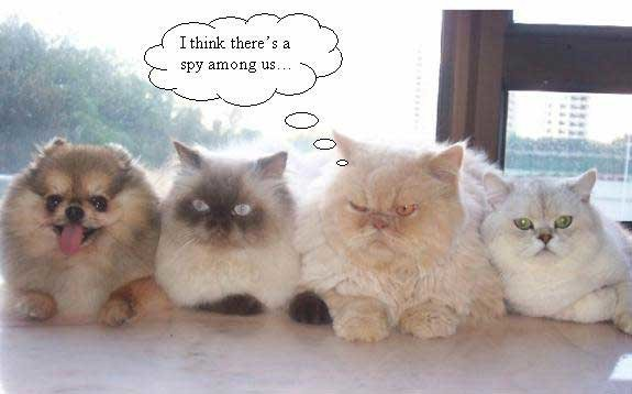 spy - funny cats and dogs pics!