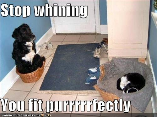 stopwhiningyo128554466864997665 - funny cats and dogs pics!