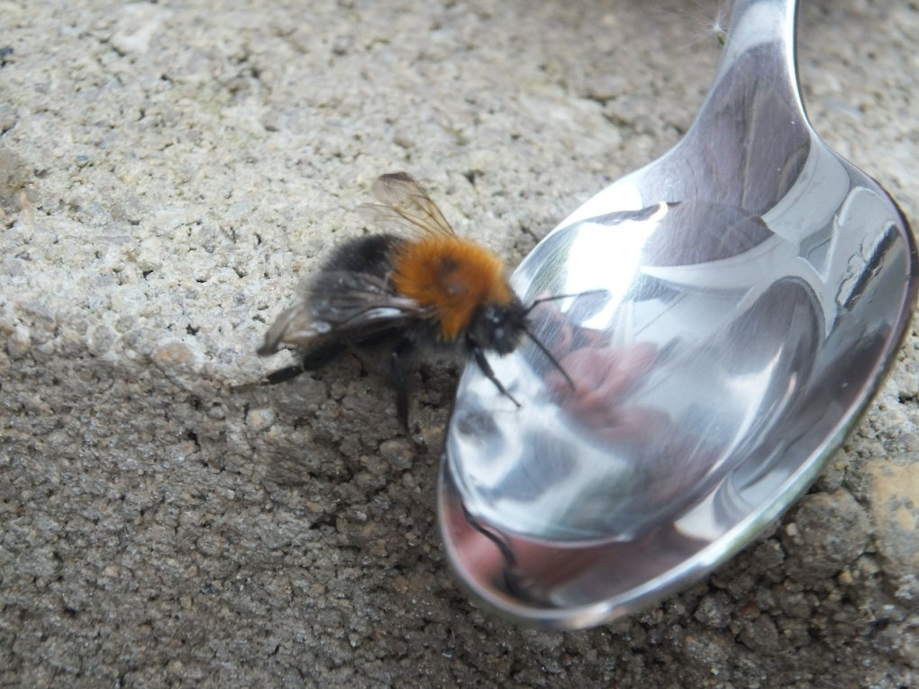 summer coming see bee floor not dead exhausted need drink melt