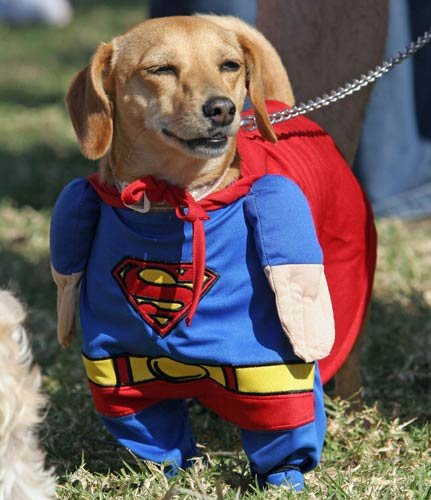 superdog431 - why wouldn't your pets hate you?