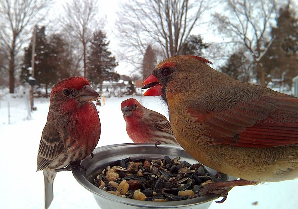 synmwpk - birds pose for motion-activated camera
