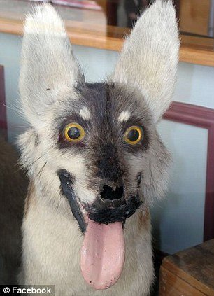 tax10 - taxidermy animals gone wrong!