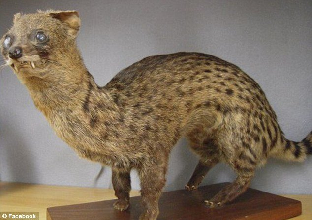 tax12 - taxidermy animals gone wrong!