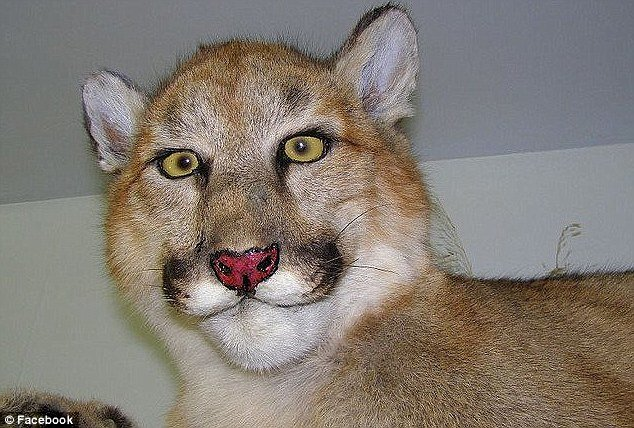 tax19 - taxidermy animals gone wrong!