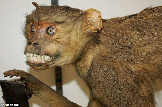 tax5 - taxidermy animals gone wrong!
