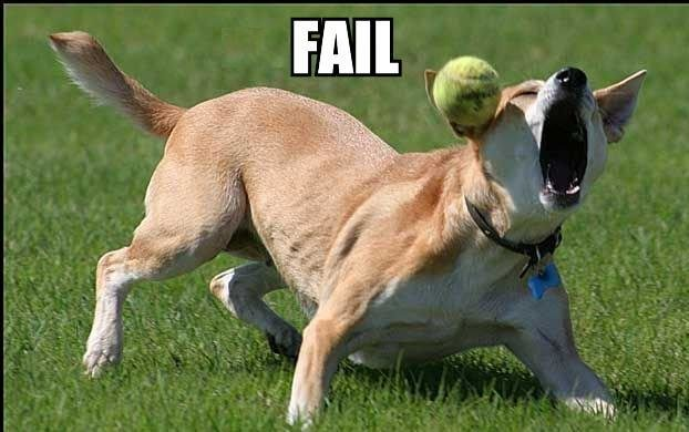 tennisball dog fail