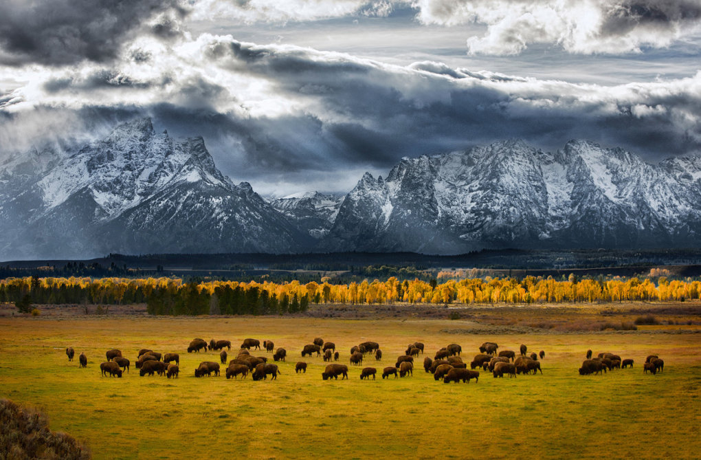 teton national park where buffalo roam glen hush