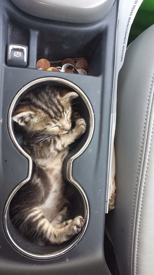 thats her favourite spot car