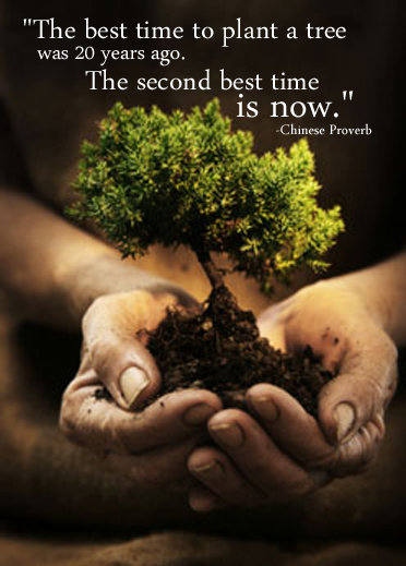 best time plant tree chinese proverb