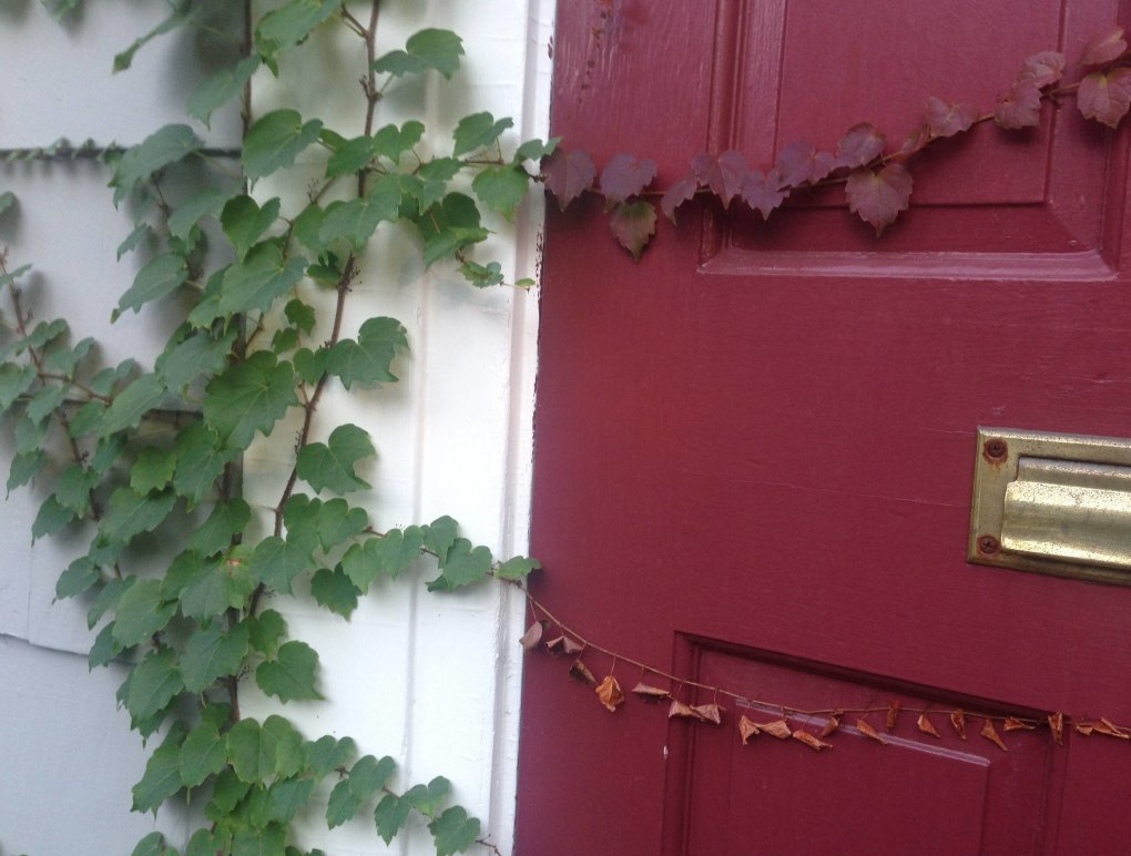 vines growing front door changed color door
